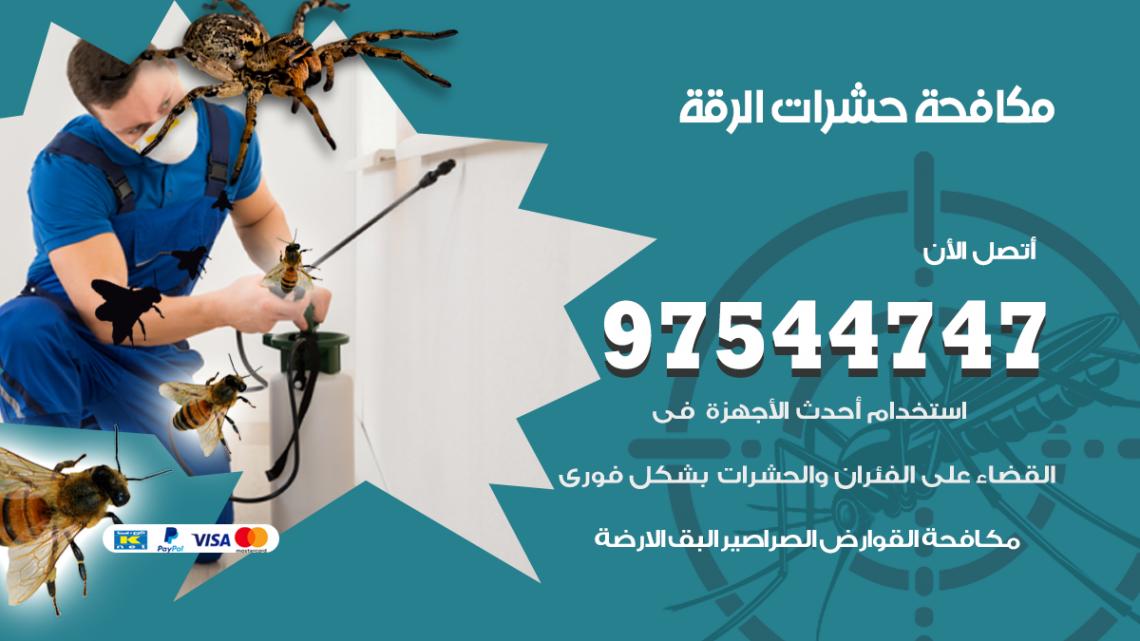 رقم مكافحة حشرات وقوارض الرقة / 50050647 / شركة رش حشرات خصم 50%