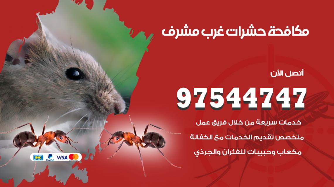 رقم مكافحة حشرات وقوارض غرب مشرف / 50050647 / شركة رش حشرات خصم 50%